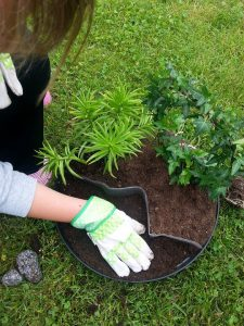 Taman, Tanaman, Bunga, Musim Panas, Pot, Tanaman Kebun