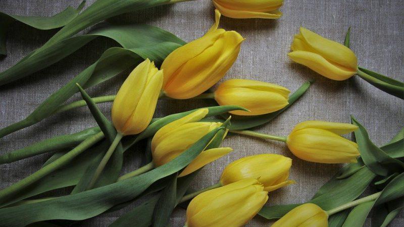 Ingin Ibu Bahagia? 7 Tips Kebahagian Ibu Anti Baper