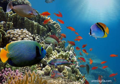 Keindahan bawah laut.