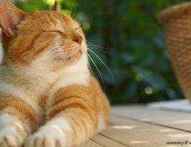 Kucing-hewan-peliharaan