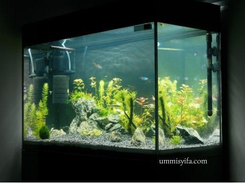 Aquascape Minimalis Jadi Pilihan