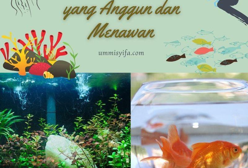 Aquascape Minimalis yang Anggun dan Menawan